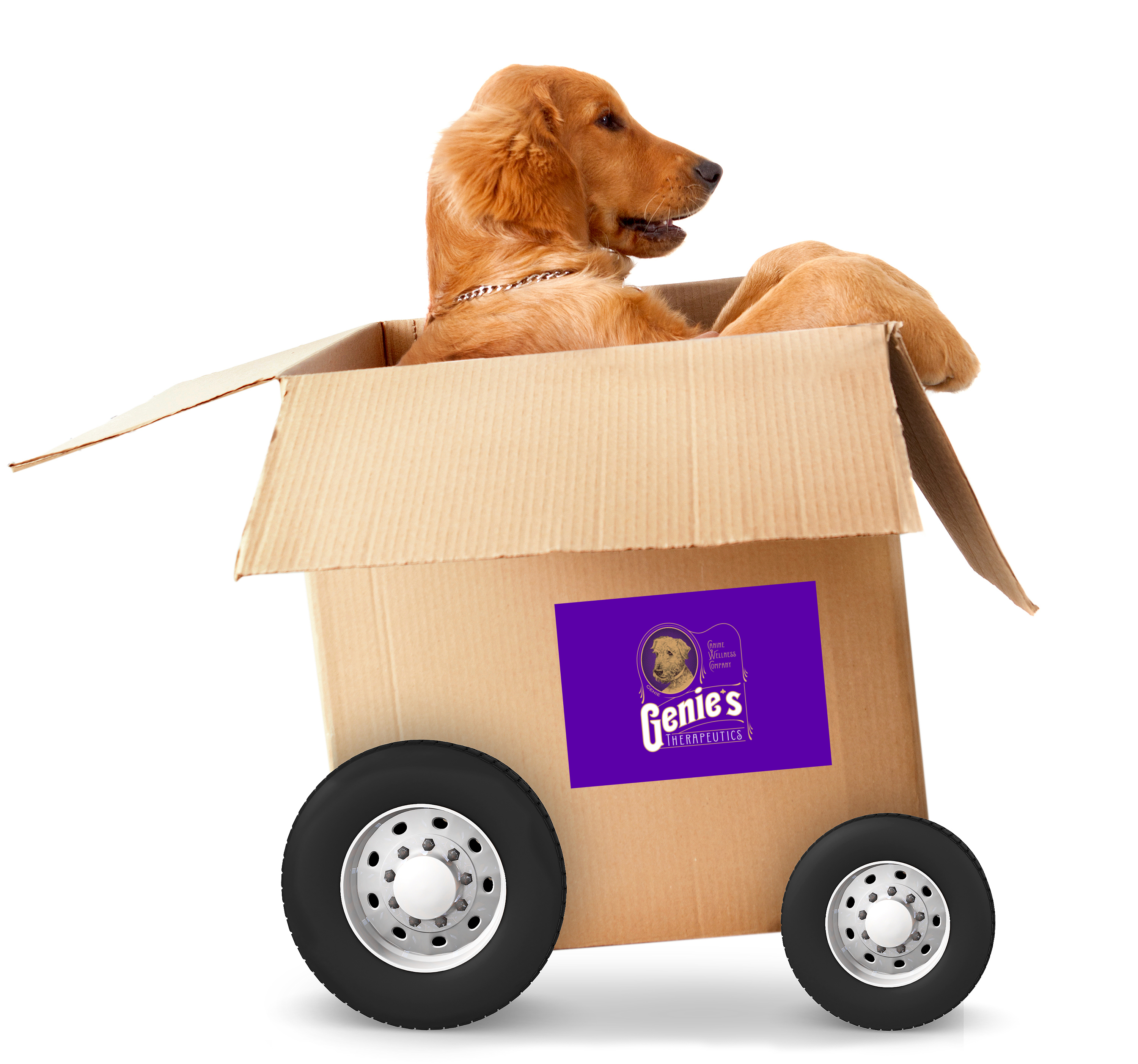 Delivery Dog